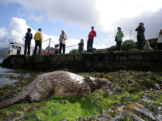 Otter, Glen Ferry. Photo credit Skye Ferry