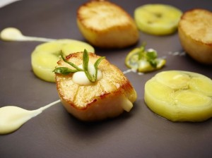Orkney hand-dived scallops
