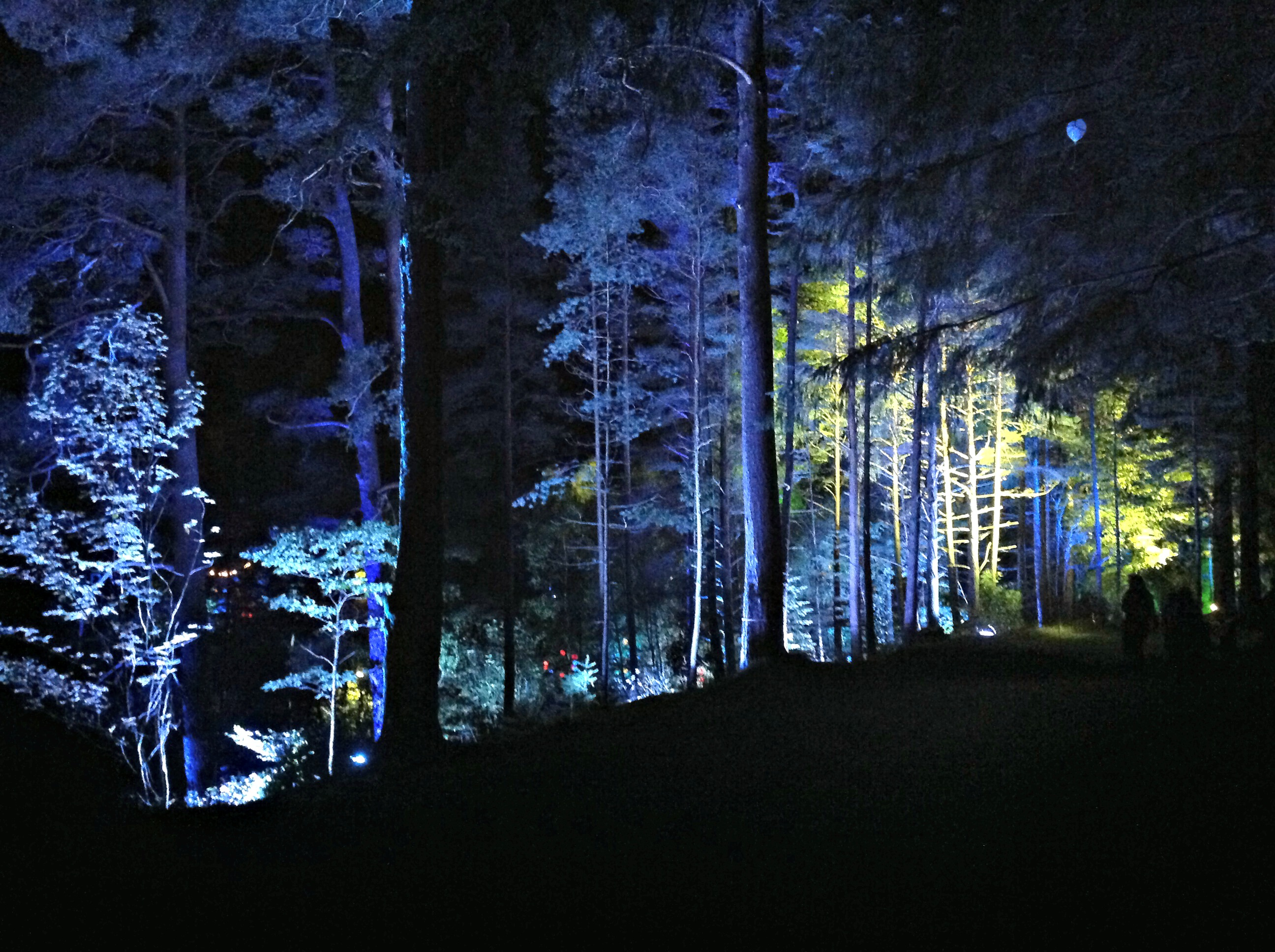 The Enchanted Forest, Faskally Woods, Pitlochry